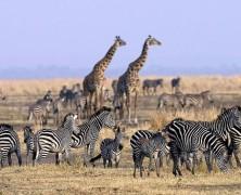 Follow schofs to Tanzania!